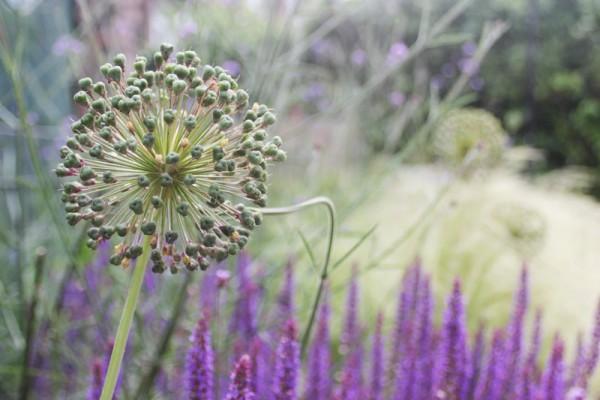 Didsbury Garden